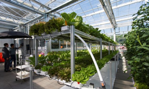 Aquaponics: Europe's Largest Urban Farm