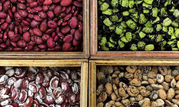 5 Vegetable Seed Saving Tips
