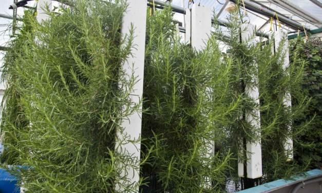Increased Harvest Vertical Growing