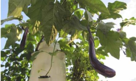 Do Vertical Gardens Require Planning?