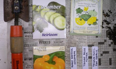 Seed Starting for Summer Gardens