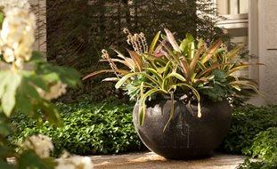 Container Gardening Ideas Garden Design
