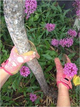 gloves garden design 9461