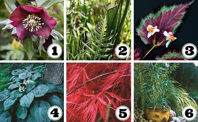 Shade Plants for Containers