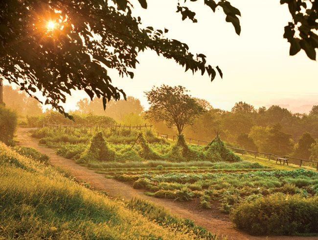 Thomas Jeffersons Monticello Garden Design