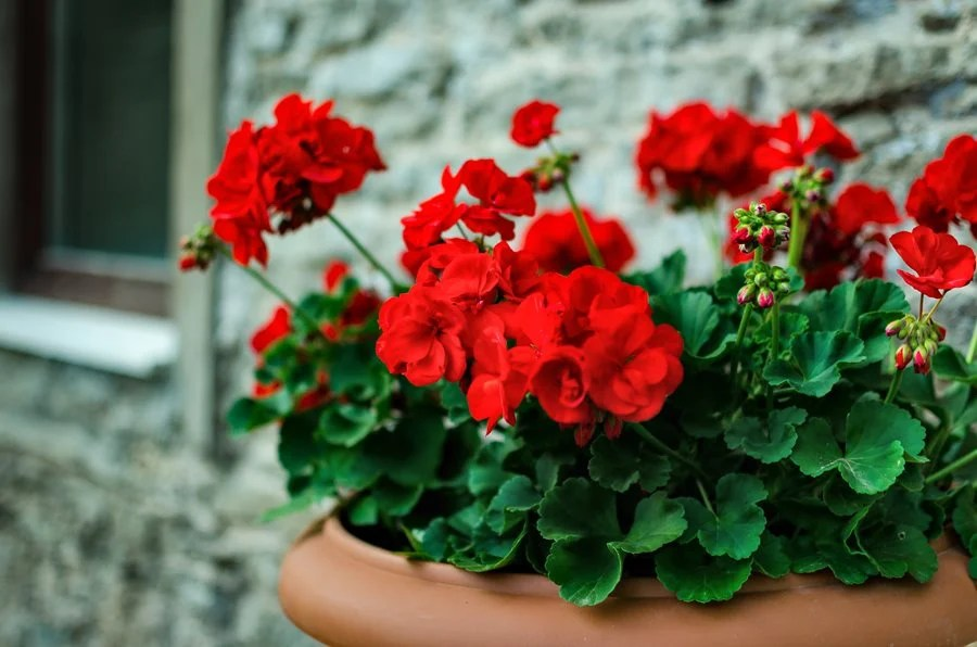 Better Homes And Gardens Planting Ideas