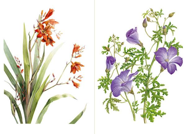 Highgrove Florilegium