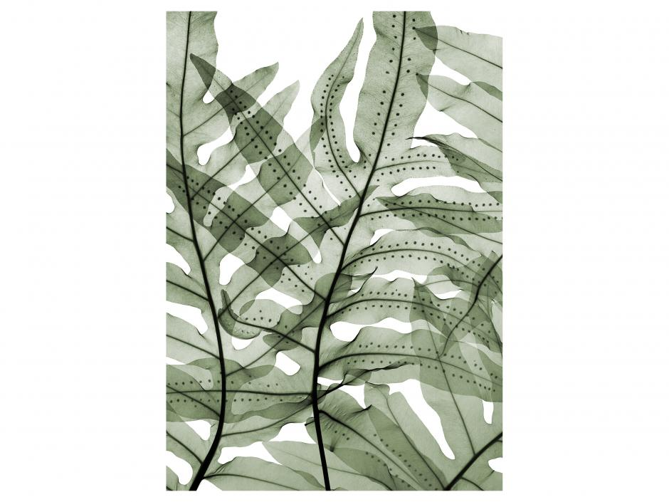 Garden Design - Cabbage Palm Fern
