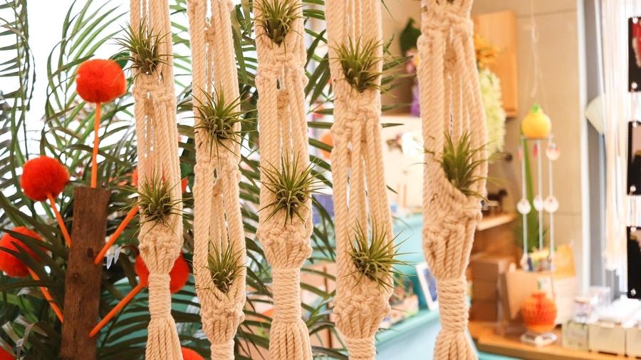 air plants in rope hangers