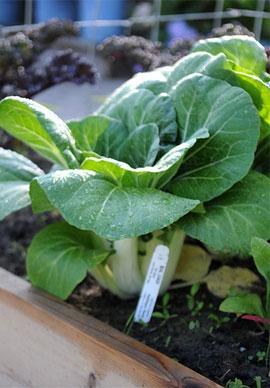 Gardening In Zones 7 8 9 Or 10 Gardener S Supply