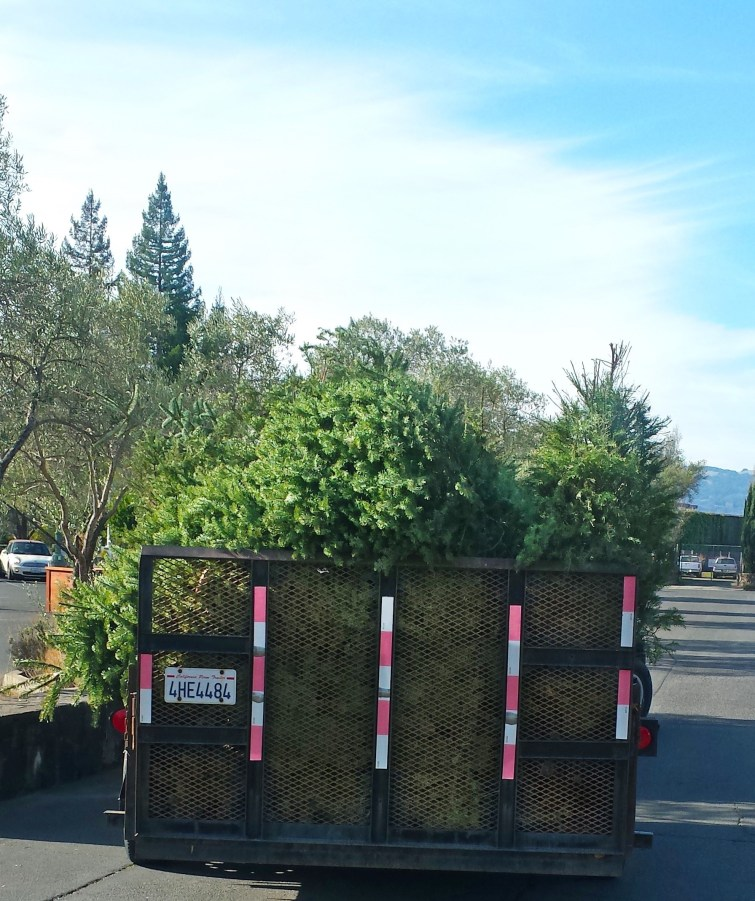 Loaded Christmas trees on Gardeners' Guild truck