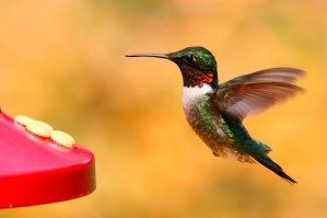 Best Hummingbird Feeder: Review of Four Types of Feeders