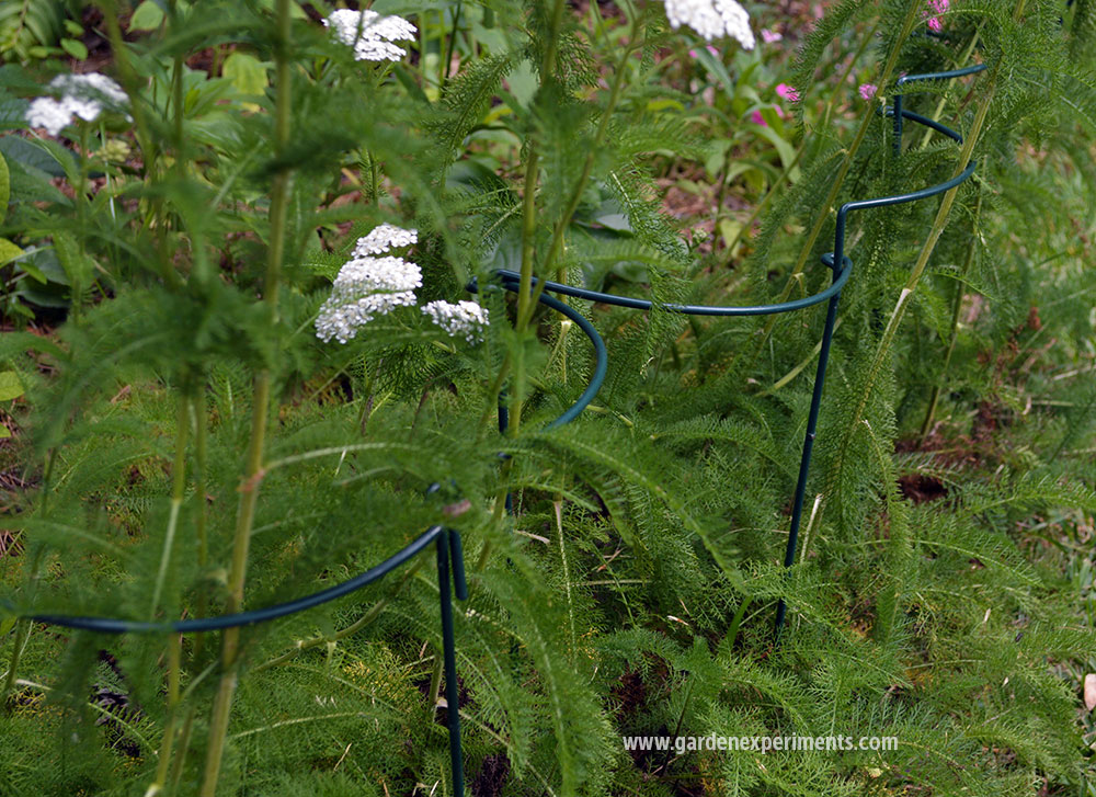 Curved plant stakes