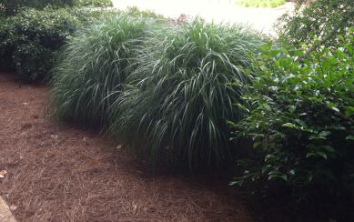 Different shrubs and grasses create texture against a walk way