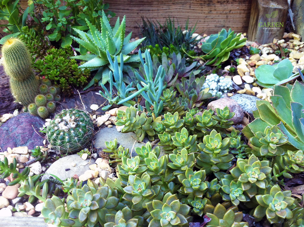 How To Create A Rock Garden For Low Water Gardening