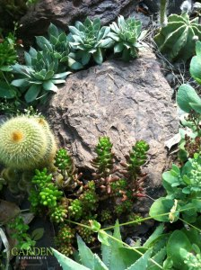 Rock garden (Xeriscaping)