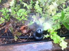 Sprinkler with deflector
