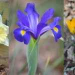 Guide to Planting Spring Blooming Bulbs