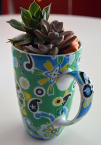 Teacup with succulent plants