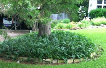 Vinca can take over. It works here b/c it is in a bed separated from other plantings and edged with rocks