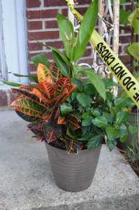 Move potted plants away from your door