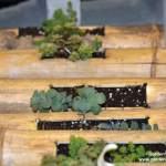 Creative succulent containers made from bamboo