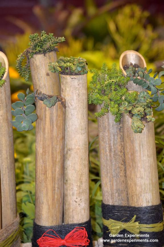 Bamboo bundled to become planters for succulents