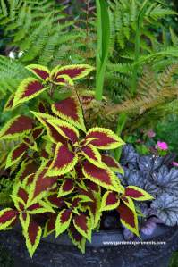 Colorful Shade Container Garden Part I