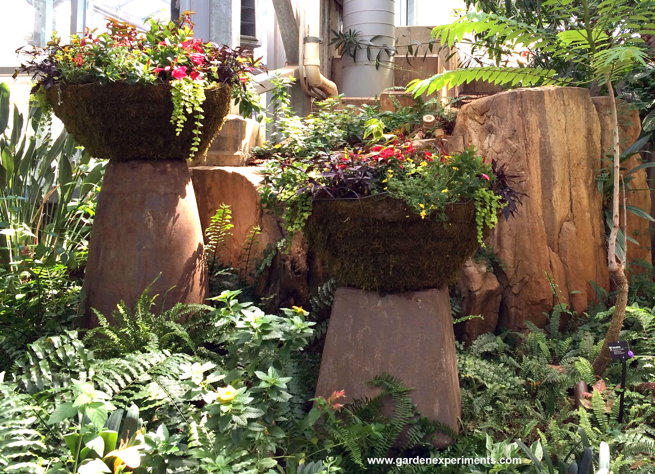 Amazing Large Planters In The Tropical Conservatory