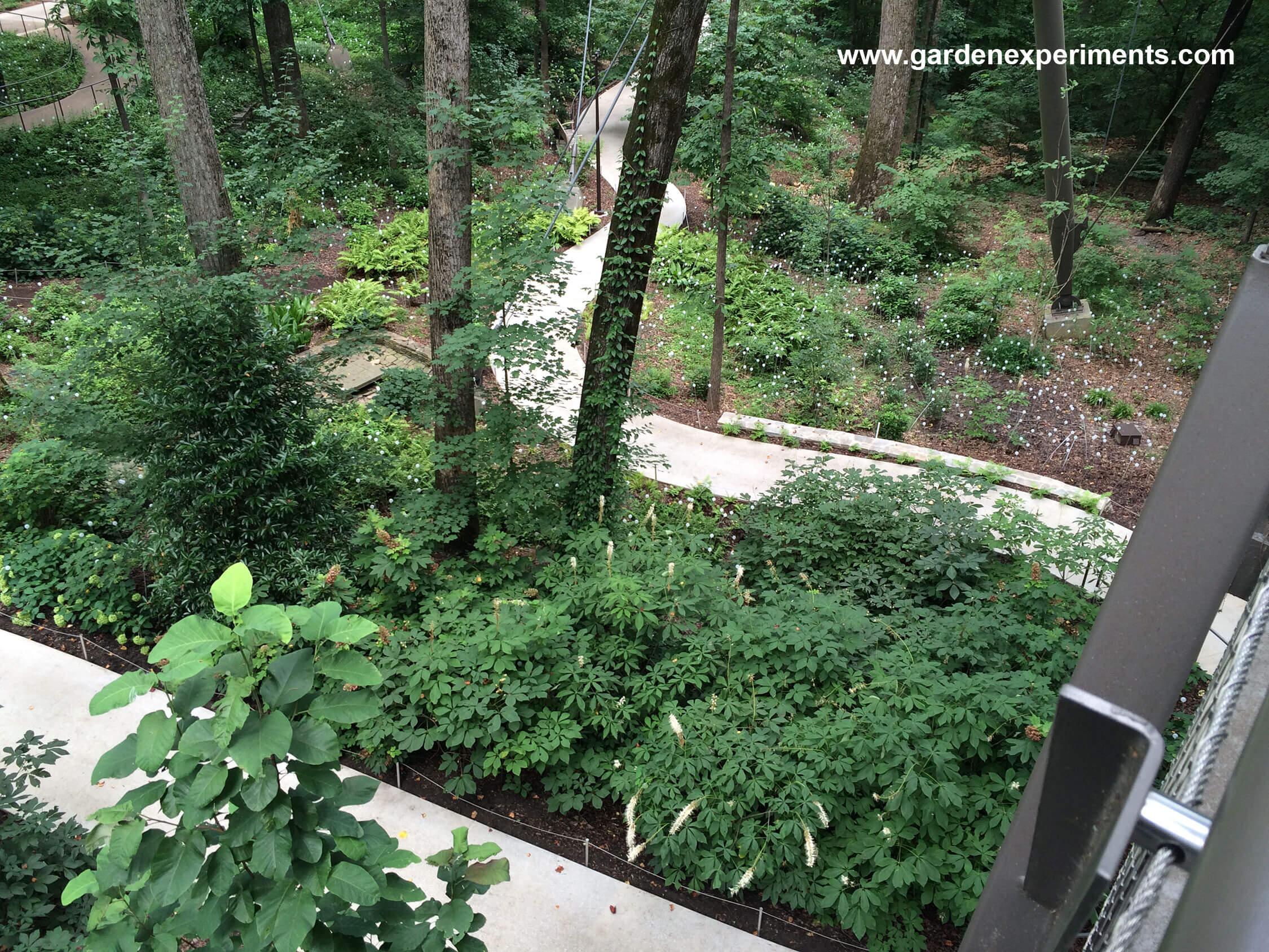 Canopy walk overlooking the azalea walkway & Kendeda Canopy Walk - Atlanta Botanical Garden