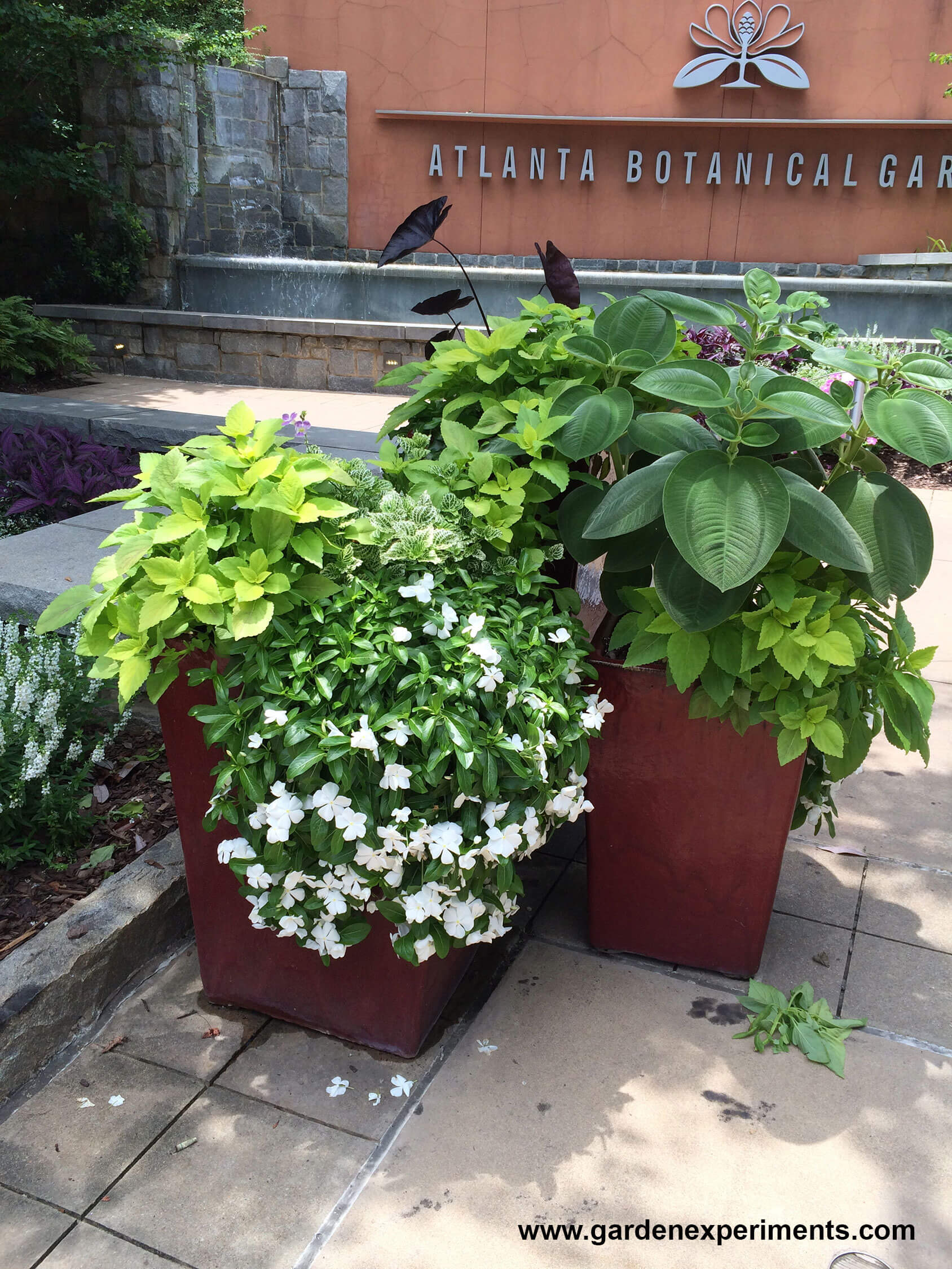 appeal to a container garden a tall container topped with a tall plant