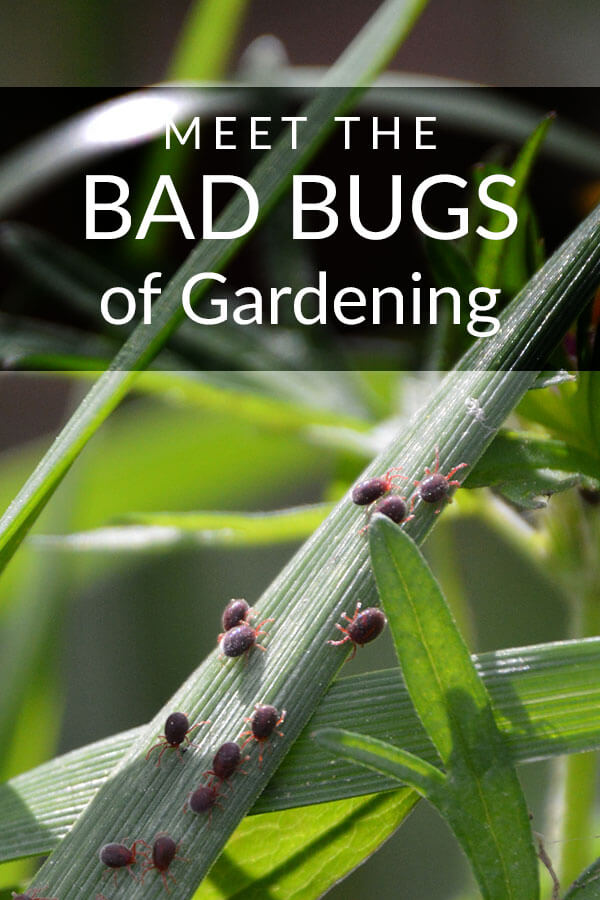Don't Let the Bad Bugs Spoil Your Outdoor Fun