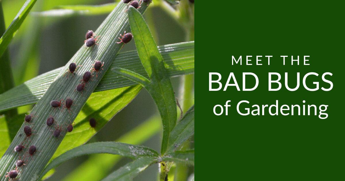 bad-bugs