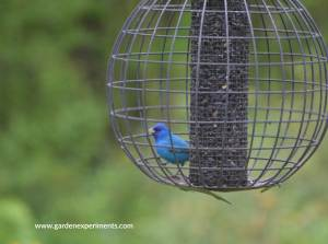 Globe Cage Feeder: Bird Feeder Review
