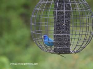 Globe Cage Feeder: Bird Feeder Review