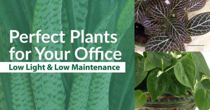 Perfect Plants for Your Office