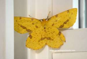 The Stunning Beauty of a Moth – Moths from My Backyard