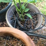 The Secret to Watering Container Gardens