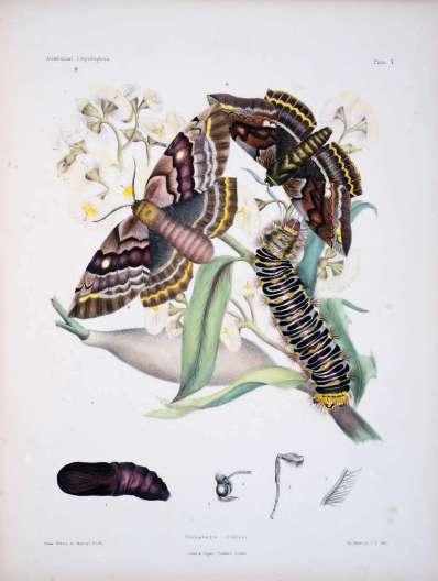 Scott Sisters Illustration