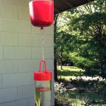 How to Keep Ants Out of Your Hummingbird Feeder