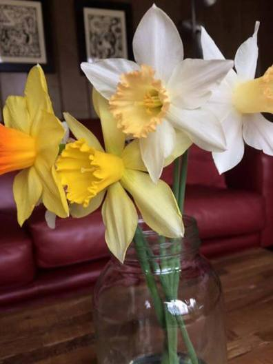 Early daffodils I brought inside for some cheer