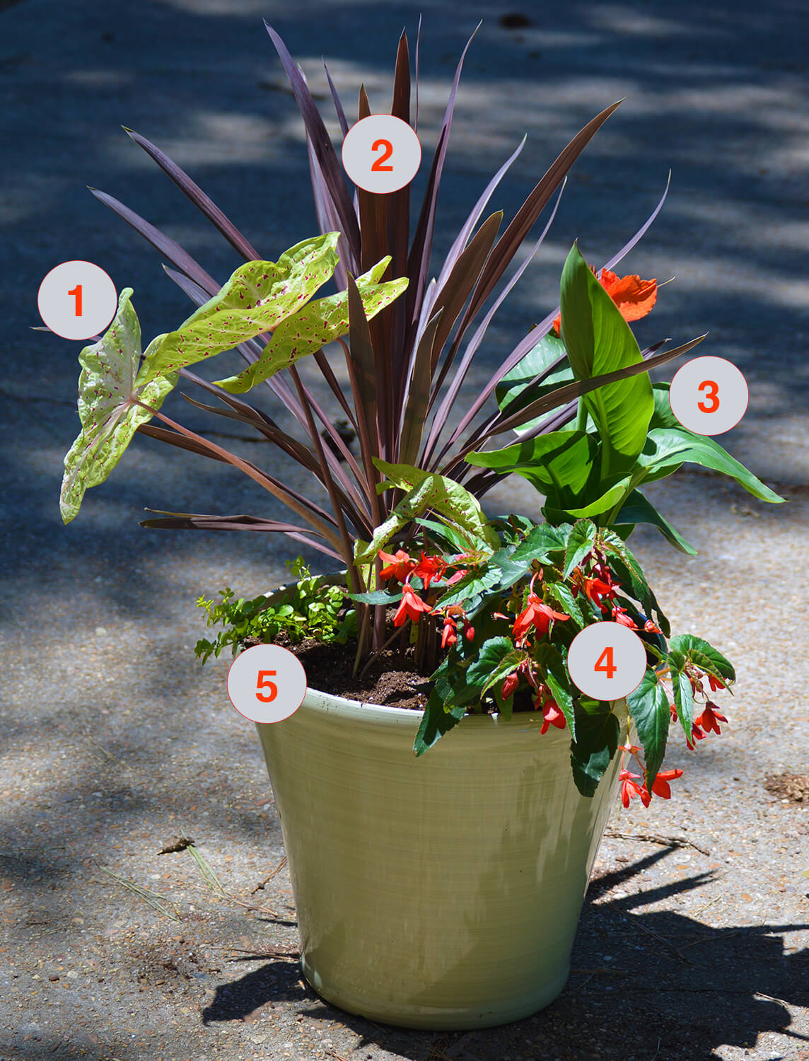 Tropical Plants Container Garden for Summer Color