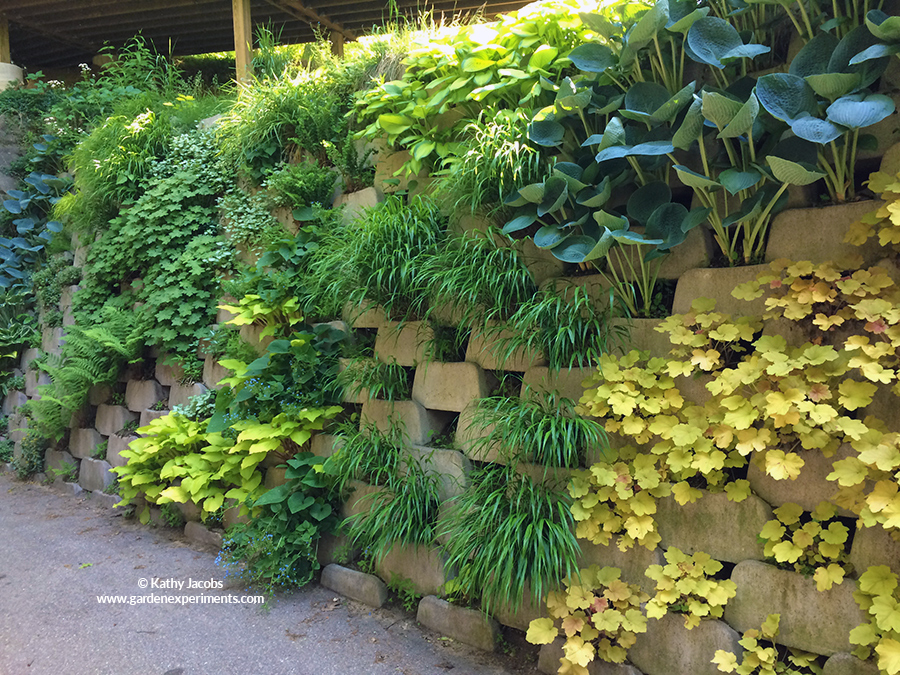 Living Wall of Shade Plants