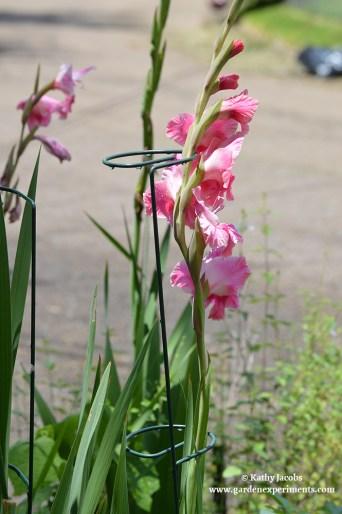 Flower Stem Stakes