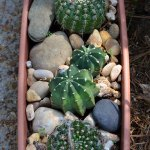 Low-Maintenance Container Gardens