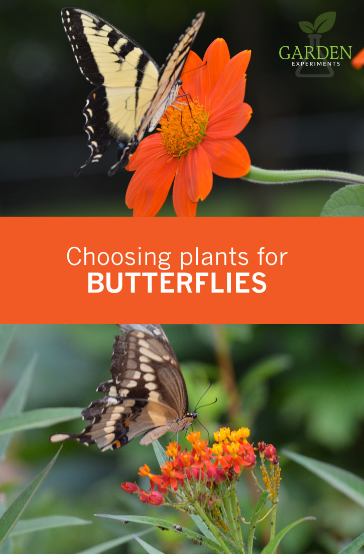 This Year Choose Plants for Butterflies - My Five Favorites To Get You Started