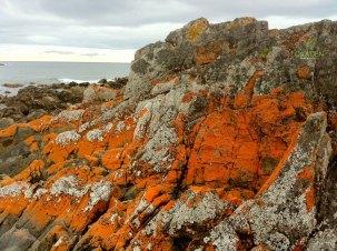 Lichen on rocks in Australia