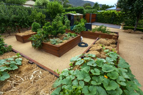 Raised Beds Made With Wood