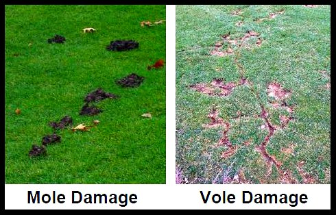 Dealing with Voles and Moles - Garden Fundamentals