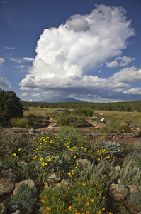 The gardens at the Arboretum at Flagstaff, Sept. 15, 2013, Flagstaff, Arizona
